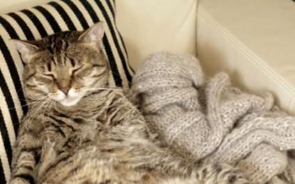 Feline fueled social media privacy controls